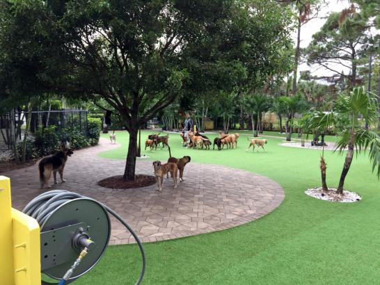 Artificial Grass Photos: Artificial Grass Installation South San Gabriel, California Dog Run, Commercial Landscape