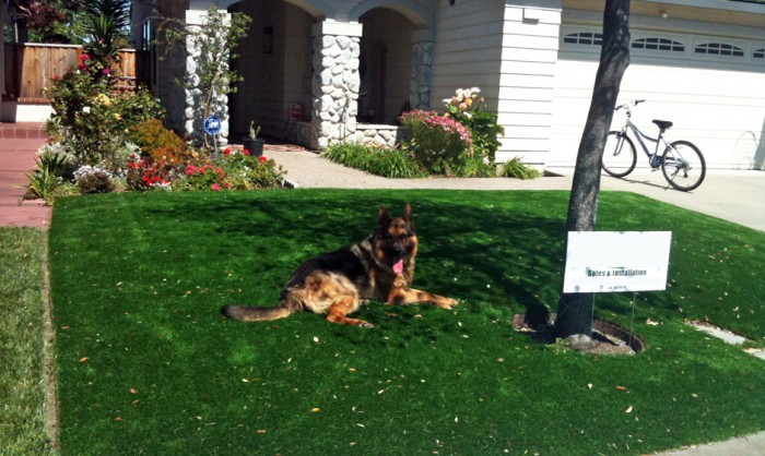 Pet Grass, Artificial Grass For Dogs in Irvine
